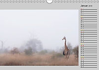 Twigas - Giraffen (Wandkalender 2019 DIN A4 quer) - Produktdetailbild 1