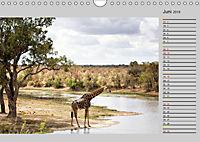 Twigas - Giraffen (Wandkalender 2019 DIN A4 quer) - Produktdetailbild 6