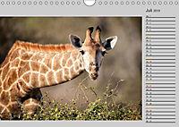 Twigas - Giraffen (Wandkalender 2019 DIN A4 quer) - Produktdetailbild 7