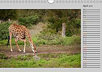 Twigas - Giraffen (Wandkalender 2019 DIN A4 quer) - Produktdetailbild 4