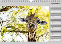Twigas - Giraffen (Wandkalender 2019 DIN A4 quer) - Produktdetailbild 9