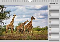 Twigas - Giraffen (Wandkalender 2019 DIN A4 quer) - Produktdetailbild 12