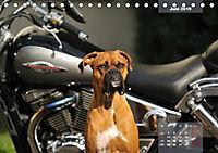 Typisch Boxer (Tischkalender 2019 DIN A5 quer) - Produktdetailbild 6