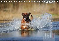 Typisch Boxer (Tischkalender 2019 DIN A5 quer) - Produktdetailbild 7