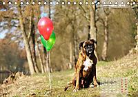 Typisch Boxer (Tischkalender 2019 DIN A5 quer) - Produktdetailbild 11