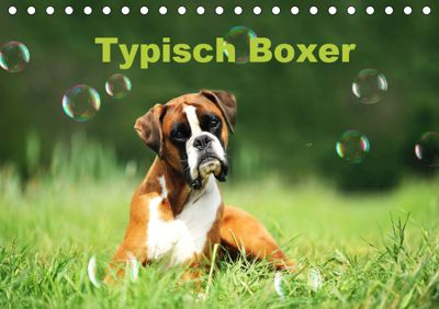 Typisch Boxer (Tischkalender 2019 DIN A5 quer), Yvonne Janetzek