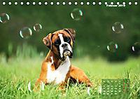 Typisch Boxer (Tischkalender 2019 DIN A5 quer) - Produktdetailbild 2