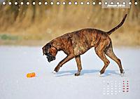 Typisch Boxer (Tischkalender 2019 DIN A5 quer) - Produktdetailbild 1