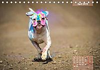Typisch Boxer (Tischkalender 2019 DIN A5 quer) - Produktdetailbild 4