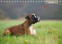 Typisch Boxer (Tischkalender 2019 DIN A5 quer) - Produktdetailbild 5