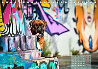 Typisch Boxer (Tischkalender 2019 DIN A5 quer) - Produktdetailbild 8