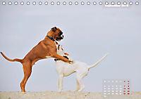 Typisch Boxer (Tischkalender 2019 DIN A5 quer) - Produktdetailbild 9