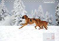 Typisch Boxer (Tischkalender 2019 DIN A5 quer) - Produktdetailbild 12