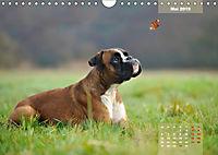 Typisch Boxer (Wandkalender 2019 DIN A4 quer) - Produktdetailbild 5