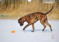 Typisch Boxer (Wandkalender 2019 DIN A4 quer) - Produktdetailbild 1