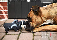 Typisch Boxer (Wandkalender 2019 DIN A4 quer) - Produktdetailbild 10