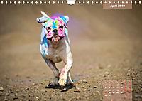 Typisch Boxer (Wandkalender 2019 DIN A4 quer) - Produktdetailbild 4