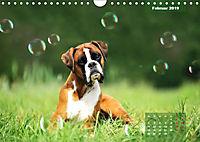 Typisch Boxer (Wandkalender 2019 DIN A4 quer) - Produktdetailbild 2