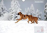 Typisch Boxer (Wandkalender 2019 DIN A4 quer) - Produktdetailbild 12