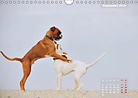 Typisch Boxer (Wandkalender 2019 DIN A4 quer) - Produktdetailbild 9