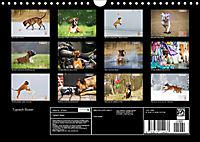 Typisch Boxer (Wandkalender 2019 DIN A4 quer) - Produktdetailbild 13