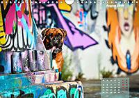 Typisch Boxer (Wandkalender 2019 DIN A4 quer) - Produktdetailbild 8