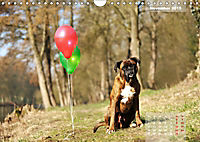 Typisch Boxer (Wandkalender 2019 DIN A4 quer) - Produktdetailbild 11