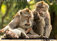 Ubud - Bali (Wandkalender 2019 DIN A4 quer) - Produktdetailbild 6