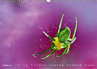 ui - Spinne. Kleine Spinnen - groß im Bild (Wandkalender 2019 DIN A3 quer) - Produktdetailbild 10