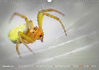 ui - Spinne. Kleine Spinnen - groß im Bild (Wandkalender 2019 DIN A3 quer) - Produktdetailbild 12