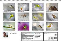 ui - Spinne. Kleine Spinnen - gross im Bild (Wandkalender 2019 DIN A3 quer) - Produktdetailbild 13