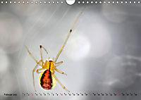 ui - Spinne. Kleine Spinnen - groß im Bild (Wandkalender 2019 DIN A4 quer) - Produktdetailbild 2
