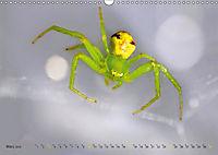 ui - Spinne. Kleine Spinnen - gross im Bild (Wandkalender 2019 DIN A3 quer) - Produktdetailbild 3