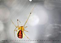 ui - Spinne. Kleine Spinnen - gross im Bild (Wandkalender 2019 DIN A3 quer) - Produktdetailbild 2