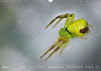ui - Spinne. Kleine Spinnen - gross im Bild (Wandkalender 2019 DIN A3 quer) - Produktdetailbild 5