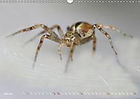 ui - Spinne. Kleine Spinnen - gross im Bild (Wandkalender 2019 DIN A3 quer) - Produktdetailbild 6