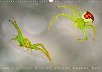 ui - Spinne. Kleine Spinnen - groß im Bild (Wandkalender 2019 DIN A3 quer) - Produktdetailbild 7