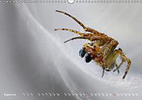 ui - Spinne. Kleine Spinnen - groß im Bild (Wandkalender 2019 DIN A3 quer) - Produktdetailbild 8