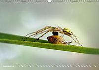 ui - Spinne. Kleine Spinnen - groß im Bild (Wandkalender 2019 DIN A3 quer) - Produktdetailbild 9