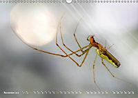 ui - Spinne. Kleine Spinnen - gross im Bild (Wandkalender 2019 DIN A3 quer) - Produktdetailbild 11
