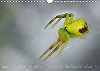 ui - Spinne. Kleine Spinnen - groß im Bild (Wandkalender 2019 DIN A4 quer) - Produktdetailbild 5
