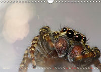 ui - Spinne. Kleine Spinnen - groß im Bild (Wandkalender 2019 DIN A4 quer) - Produktdetailbild 4