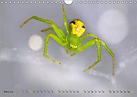 ui - Spinne. Kleine Spinnen - groß im Bild (Wandkalender 2019 DIN A4 quer) - Produktdetailbild 3