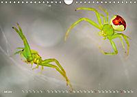 ui - Spinne. Kleine Spinnen - groß im Bild (Wandkalender 2019 DIN A4 quer) - Produktdetailbild 7
