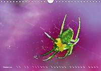ui - Spinne. Kleine Spinnen - groß im Bild (Wandkalender 2019 DIN A4 quer) - Produktdetailbild 10