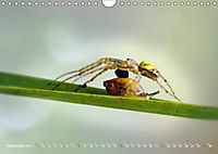 ui - Spinne. Kleine Spinnen - groß im Bild (Wandkalender 2019 DIN A4 quer) - Produktdetailbild 9