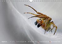 ui - Spinne. Kleine Spinnen - groß im Bild (Wandkalender 2019 DIN A4 quer) - Produktdetailbild 8