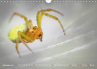 ui - Spinne. Kleine Spinnen - groß im Bild (Wandkalender 2019 DIN A4 quer) - Produktdetailbild 12