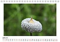 Un-Kraut (Tischkalender 2019 DIN A5 quer) - Produktdetailbild 6