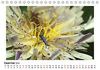 Un-Kraut (Tischkalender 2019 DIN A5 quer) - Produktdetailbild 12